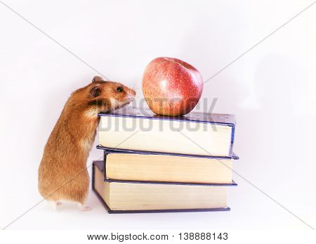 Funny ginger hamster Red hamster, apple and books  isolated on white background