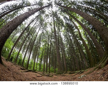 Calm forest background taken by fish eye lens