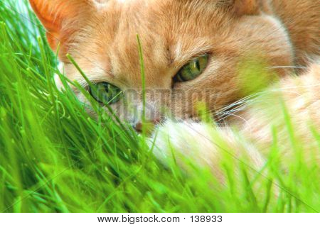 Cat Napping In The Grass