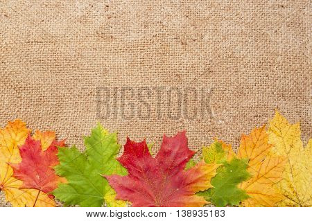 Autumn Maple Leaves On Wool Cloth Background
