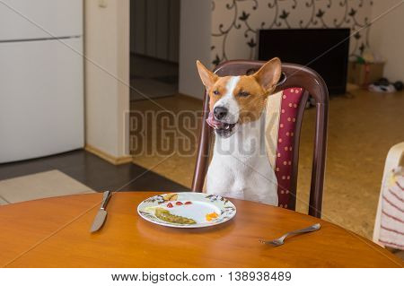 Basenji dog is satisfied with the service in own restaurant