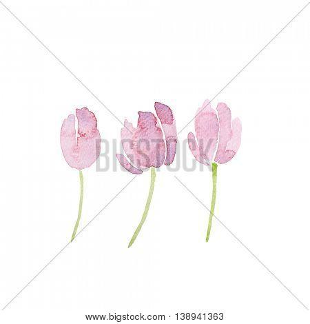 Watercolor Tulips (hand drawn)