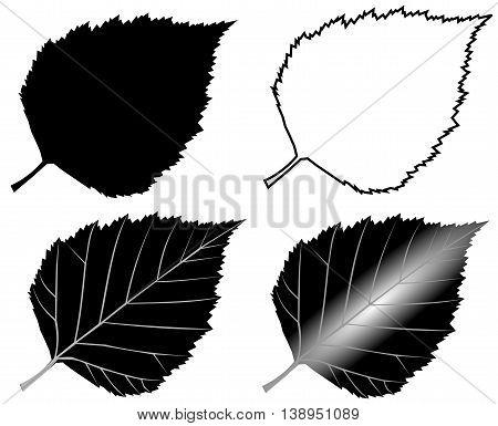 birch ,  isolated birch leaf , illustration birch leaf ,