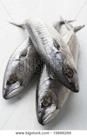 Fresh Fish On Bench