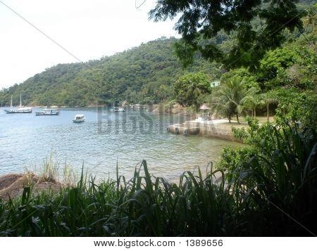 Island Jungle 3