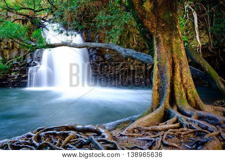 Landscape View Of Waterfall And Old Tree Near Road To Hana, Maui