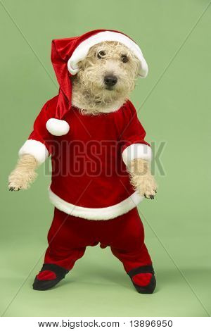 Samll Dog In Santa Costume poster