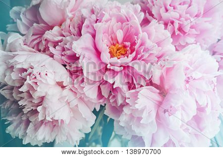 Fresh bunch of pink peonies peony roses flowers, white with blue effect shine. Pastel floral wallpaper, background from flower petals. Trendy color. Bloom love concept. Card, text place, copy space.