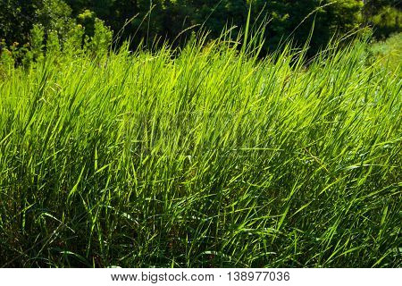 Beautiful background with fresh grass on sunny day