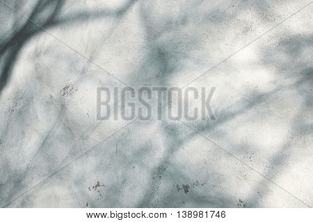 white cement wall texture with tree shadow background