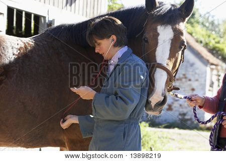 Vet Examining Horse With Stethescope