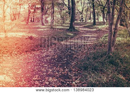 Way in forest  ( Filtered image processed vintage effect. )