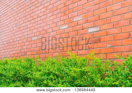 Brick wall with green plants