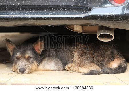 dirty thai dog sleep under the old car