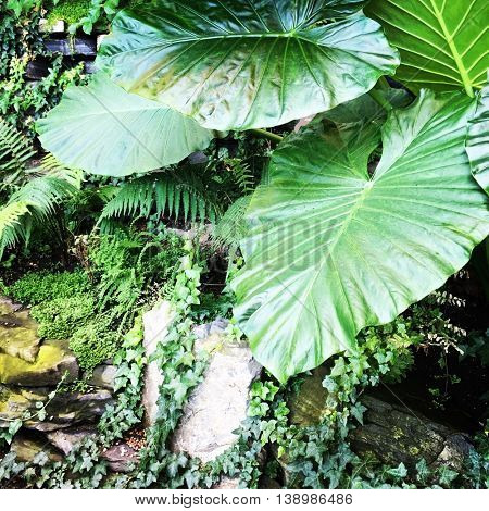 Beautiful Tropical plants with Instagram effect