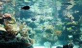 Caribbean reef aquarium with a variety of tropical fish poster