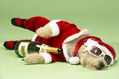 Samll Dog In Santa Costume Lying Down poster