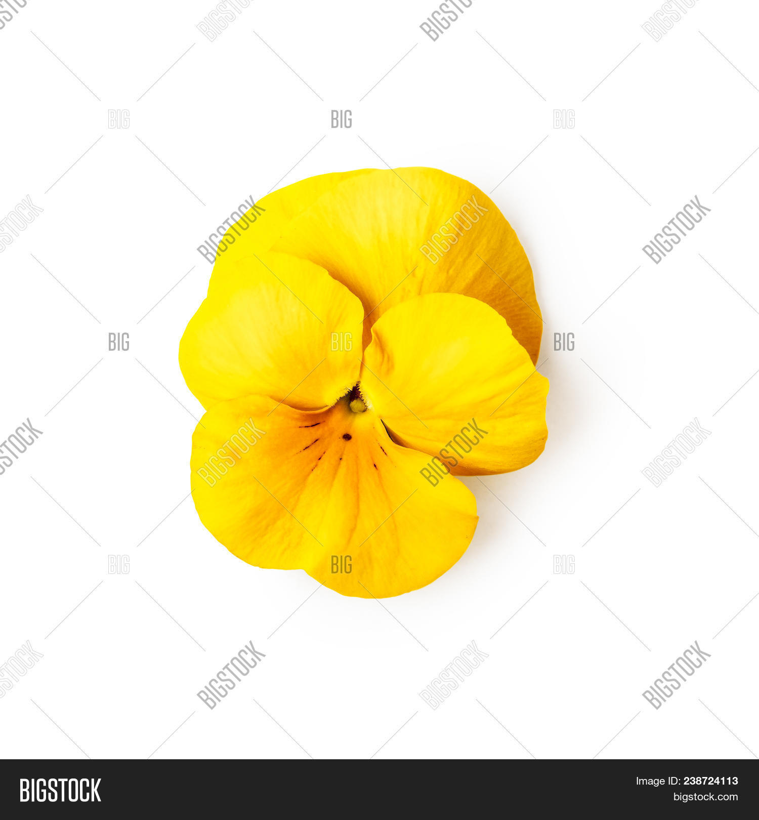 Yellow Pansy Flower Image Photo Free Trial Bigstock