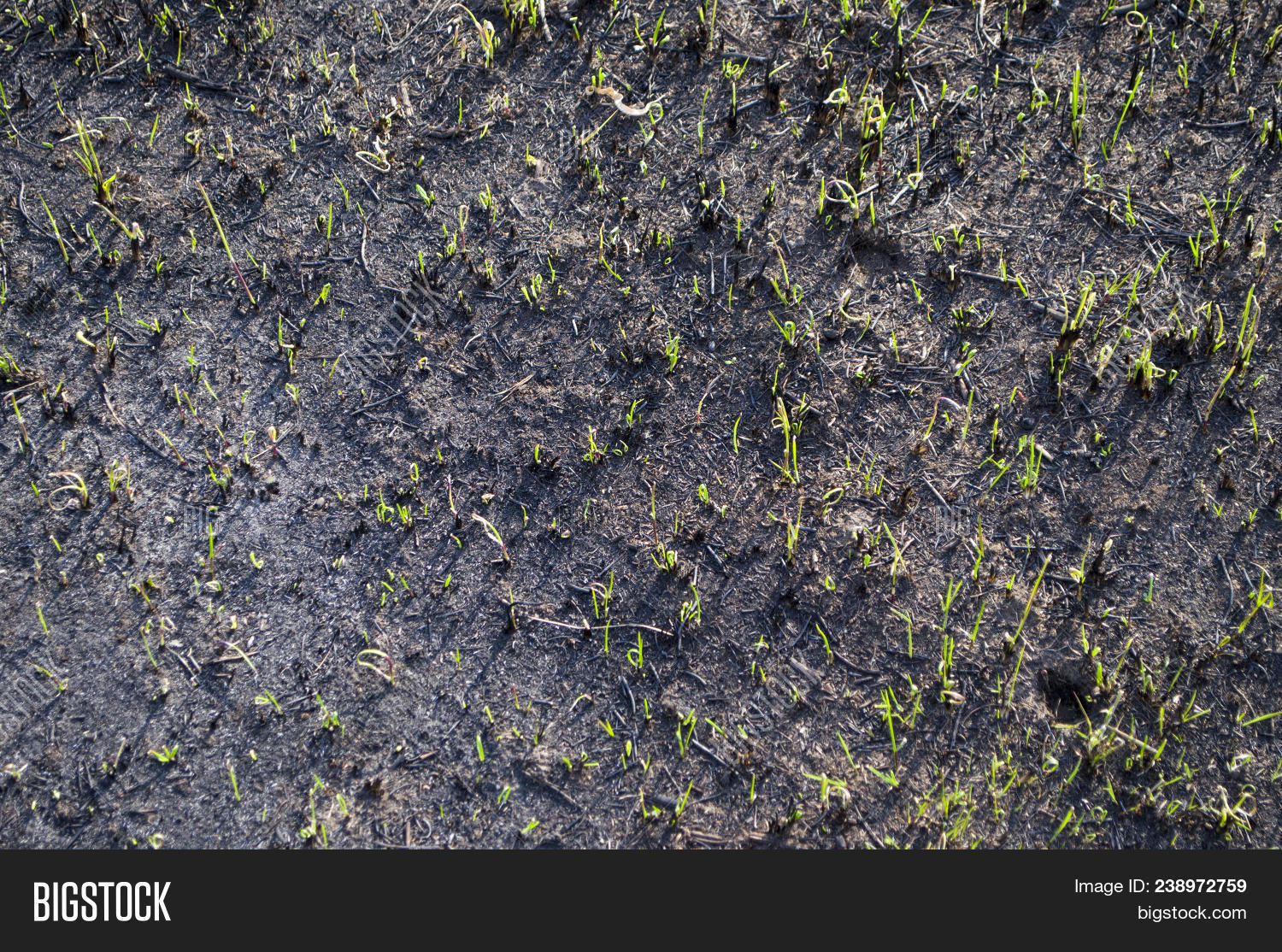 Dry Grass Texture Image & Photo (Free Trial) | Bigstock