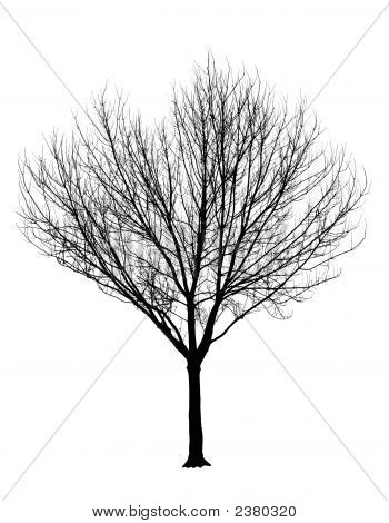 Bare Tree Silhouette Isolation