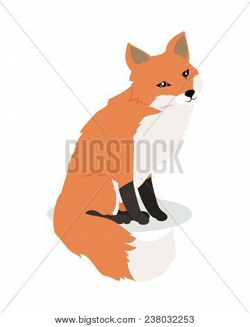Fox cartoon character. Cute fox flat vector isolated on white background. North America and Eurasia fauna. Fox icon. Animal illustration for zoo ad, nature concept, children book illustrating poster
