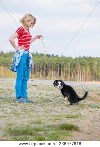 Beautiful woman with Australian Shepherd purebred dog on meadow in autumn or spring, outdoors countryside. Black Tri color Aussie puppy, 3 months old.