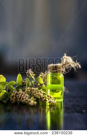Ayurvedic/ Herbal/ Medicinal Essence Of Herb Tulsi Or Holy Basil In A Transparent Bottle With Leaves