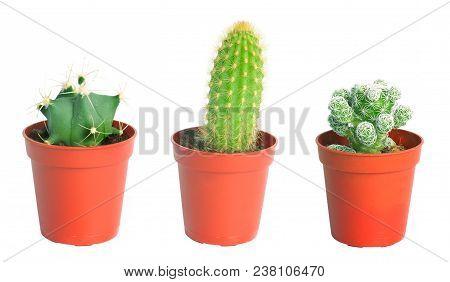 Set Cactus, Succulent Plants In Pot, Isolated On White. Interior Gardening Decor