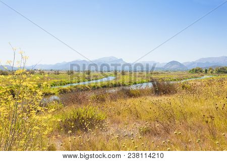 Alcudia, Mallorca, Spain - Blooming Landscape Of Mallorca In Front Of Some Impressive Mountains In T