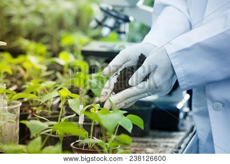 Agronomist Holding Soil In Hands Above Seedlings
