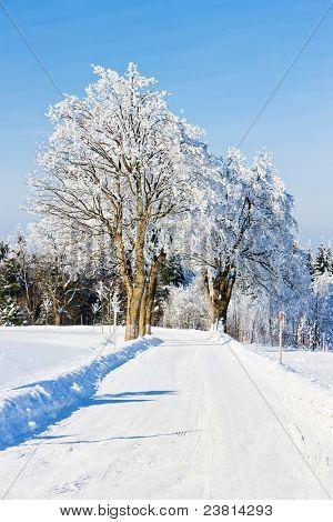 Orlicke Mountains in winter, Czech Republic