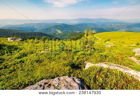 Landscape Of Carpathian High Mountain Ridge. Lonely Spruce Tree Among Huge Rocks On Grassy Hillside.