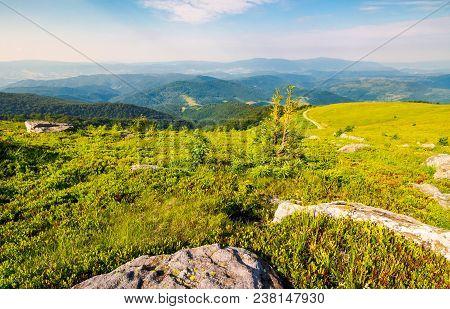 Landscape Of Carpathian High Mountain Ridge. Lonely Spruce Tree Among Huge Rocks On Grassy Hillside.
