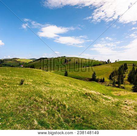 Rolling Hills Of Podobovec Valley. Lovely Rural Landscape Of Carpathian Mountains, Ukraine