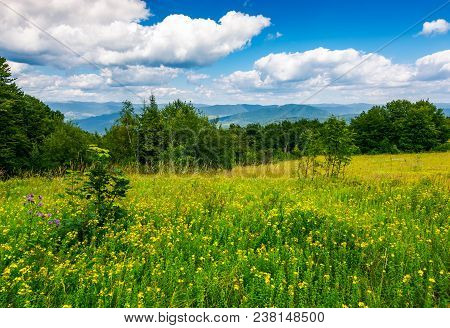 Meadow With Wild Herbs On Top Of A Hill In Summer. Beautiful Nature Scenery In Mountains On A Cloudy