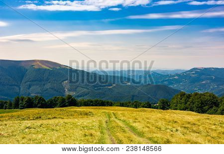 Mountain Road Through Hillside With Forest. Lovely Grassy Slopes In Fine Autumn Afternoon Weather