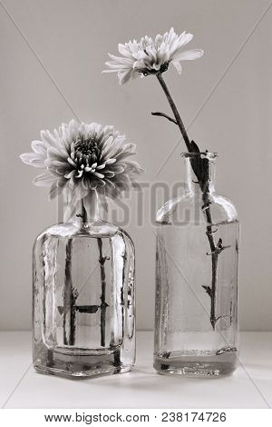 Sepia Toned Still Life With Beautiful Chrysanthemum Flowers In The Small Vintage Glass Botlles Again