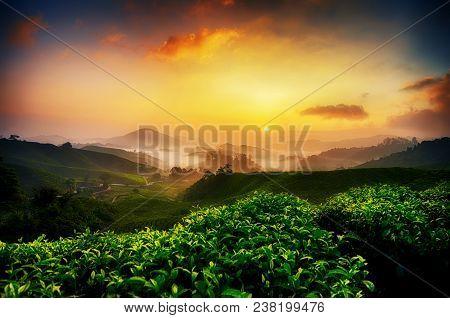 Beautiful Morning, Tea Plantation Scenery Over Sunrise Background And Stunning Sky At Cameron Highla