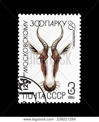 Soviet Union - Circa 1984 : Cancelled Postage Stamp Printed By Soviet Union, That Shows Bontebok Ant