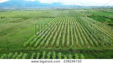 drone photography,aerial view of orchards in resen, prespa, macedonia,image poster