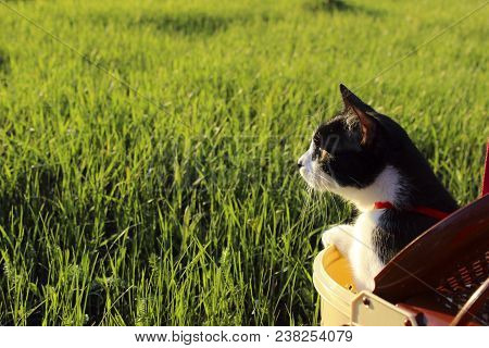 Black Cat Outdoor. Cat Over Grass Background. Cat Looking To The Side, Cropped Shot.summer Nature Ba