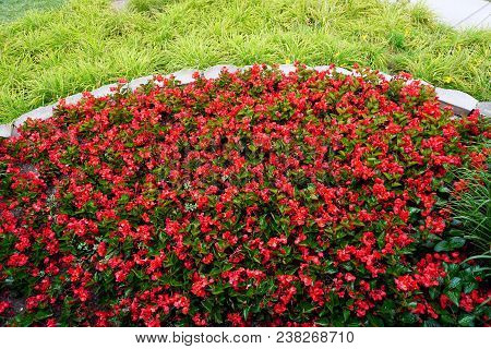 New Guinea Impatiens Bloom In A Flower Garden In The Wesmere Country Club Subdivision Of Joliet, Ill