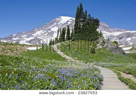 Mount Rainier's Summer Meadows