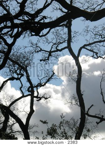 CloudsnTrees
