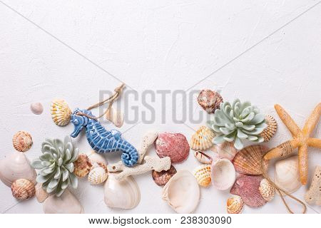 Border From Sea Shells, Sea Horse, Coral, Succulent Echeveria. Sea Objects. Selective Focus. Place F