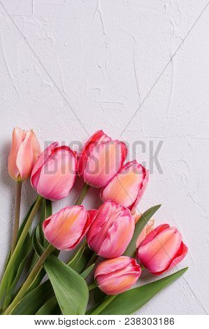 Fresh Pink Tulip Flowers On  Textured Background. Floral Still Life.  Selective Focus. View From Abo