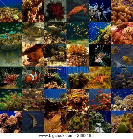 Collage allgemeine Unterwasser (Medium)
