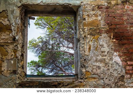 View Of A Tree Branches From The Window Of The Abandoned Old Mansion Called Dacha Kvitko, Sochi, Rus