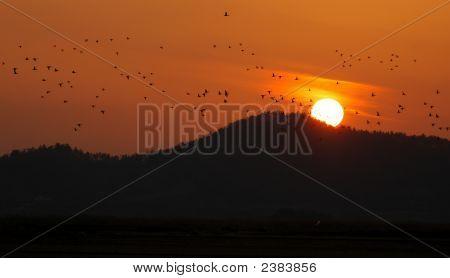 Sonnenuntergang und Enten