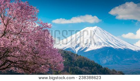 Mountain Fuji And Pink Cherry Blossom Sakura Tree On Blue Sky White Clound In Kawaguchiko, Japan ,ch